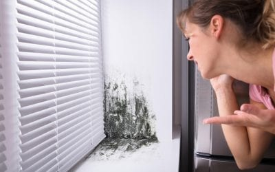 4 Signs of Mold Growth In Your Home